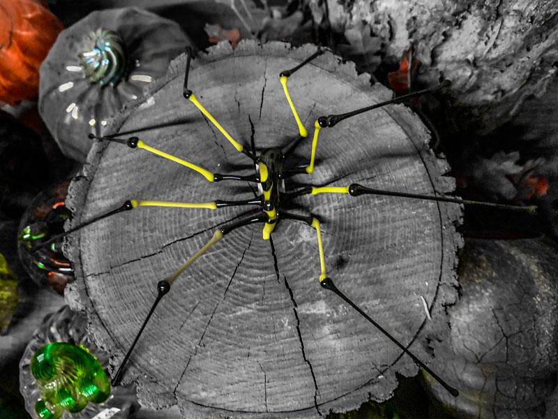 Glass Spider